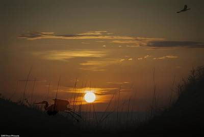 Photograph - Sunset And Silhouette  by Debra Forand