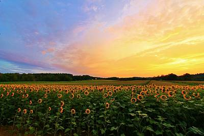 Photograph - Sunset And Sunflowers by Catie Canetti