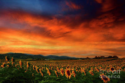 Farm Scene Photograph - Sunset And Sunflowers by Darren Fisher