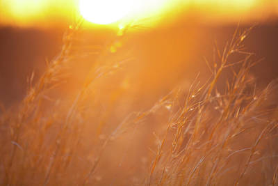Photograph - Sunset And Tall Grass by Steven Green