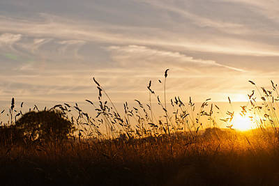 Photograph - Sunset And Wheat Field by Johnny Sandaire