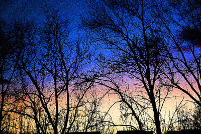 Photograph - Sunset And Winter Trees by Karen Adams