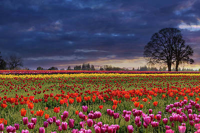 Farmland Photograph - Sunset At Colorful Tulip Field by David Gn