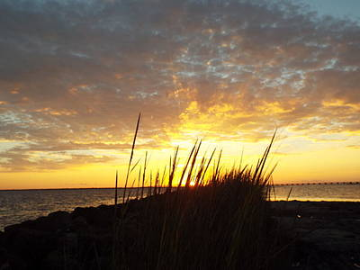 Photograph - Sunset At Goose Island, Tx by Cindy Croal