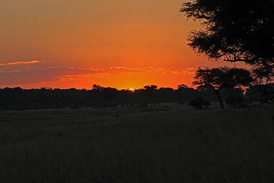 Photograph - Sunset At Hwange by Tony Murtagh