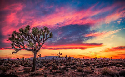 Photograph - Sunset At Joshua by Rikk Flohr