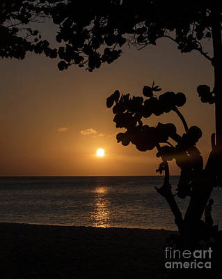 Photograph - Sunset At Palm Beach by Judy Wolinsky