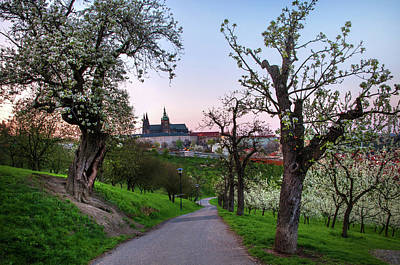Photograph - Sunset At Petrin Hill With Blooming Pear Tree. Prague by Jenny Rainbow