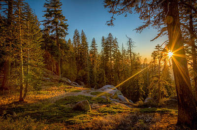 Photograph - Sunset At Sequoia by Rikk Flohr