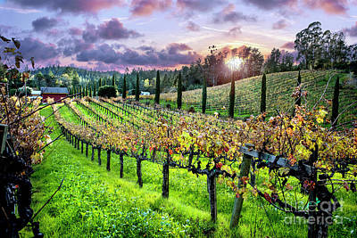 Winery Photograph - Sunset At The Palmers by Jon Neidert