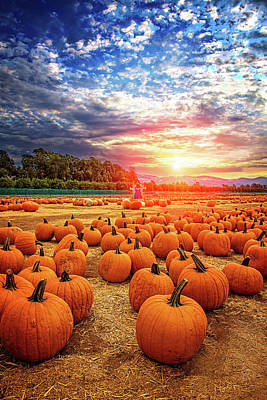 Photograph - Sunset At The Pumpkin Patch by Lynn Bauer