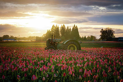 Winter Animals Rights Managed Images - Sunset at the Tulip Farm Royalty-Free Image by James Udall