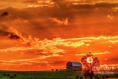 Photograph - Sunset Barn And Cattle  by Thomas R Fletcher
