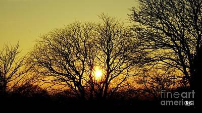 Sunset Between Trees Original by LDS Dya