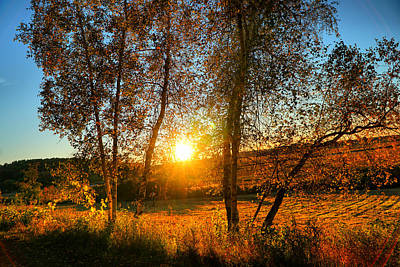 Sunset Between Two Birches Art Print by Lilia D