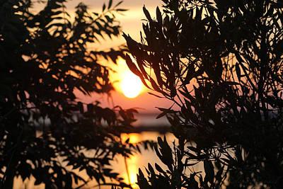Photograph - Sunset Beyond The Trees by Robert Banach
