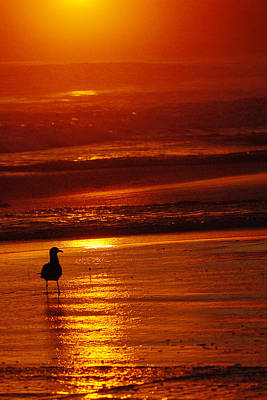 Photograph - Sunset Bird 2 by Jill Reger