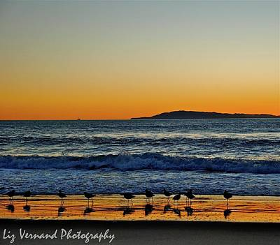 Photograph - Sunset Bird Reflections by Liz Vernand