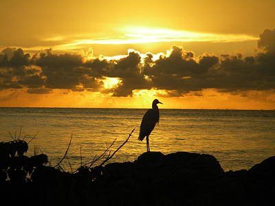 Photograph - Sunset Bird by Sean Allen