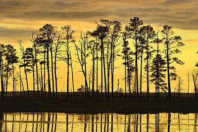 Photograph - Sunset - Blackwater Wildlife Refuge by Dana Sohr