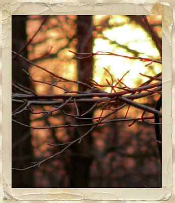 Sunset Branch Out  Art Print by Debra     Vatalaro
