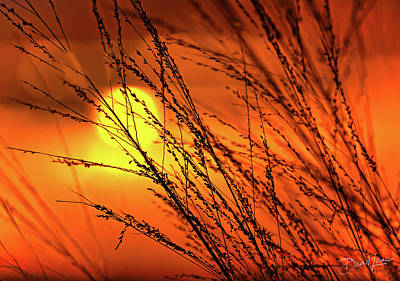 Photograph - Sunset Breeze by David A Lane
