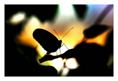 Photograph - Sunset Butterfly by Christopher Wieck
