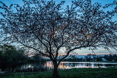 Photograph - Sunset By The Pond by Randy Scherkenbach