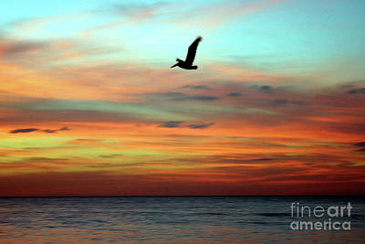 Photograph - Sunset Byrd by Digartz - Thom Williams