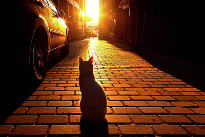 Streetshot Photograph - Sunset Cat by Marji Lang
