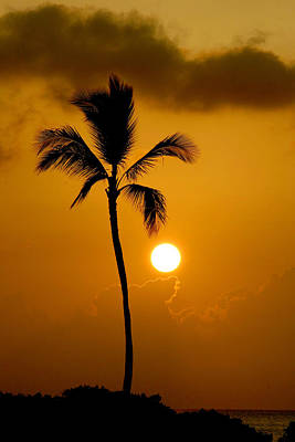 Photograph - Sunset Coconut Palm Maui Hawaii by Pierre Leclerc Photography