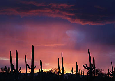 Photograph - Sunset Colors by Jean Clark