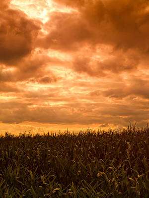 Cornfields Photograph - Sunset Corn Field by Wim Lanclus