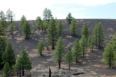 Photograph - Sunset Crater Volcano National Monument - 3 by Christy Pooschke