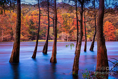 Beaver Photograph - Sunset Cypresses by Inge Johnsson