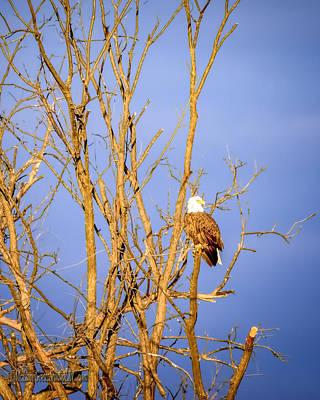 Photograph - Sunset  Eagle by LeeAnn McLaneGoetz McLaneGoetzStudioLLCcom