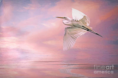 Photograph - Sunset Egret by Brian Tarr