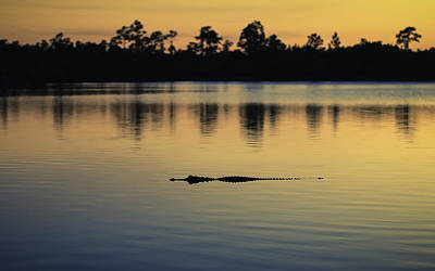 Alligator Digital Art - Sunset Encounter by Eduard Moldoveanu