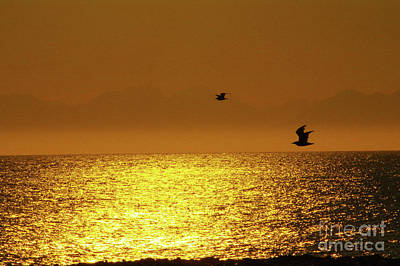 Photograph - Sunset Flight Alaska by Louise Magno