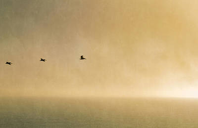 Photograph - Sunset Flight by Bonnie Follett
