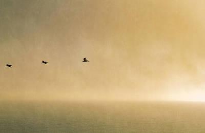 Photograph - Sunset Flight by Bonnie Follett