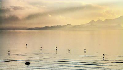 Photograph - Sunset Flight by Emily Bristor