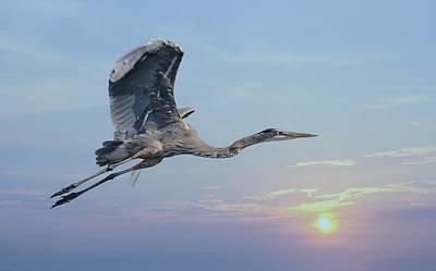 Photograph - Sunset Flight by Fraida Gutovich