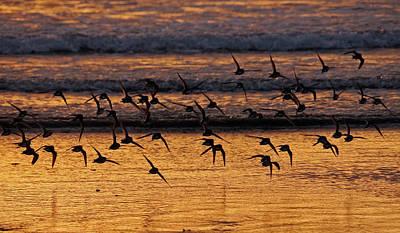 Photograph - Sunset Flight by Inge Riis McDonald