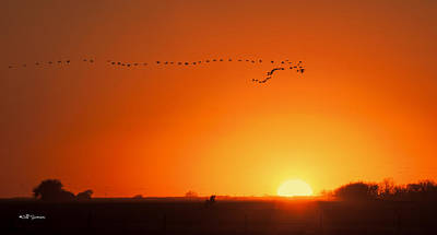 Photograph - Sunset Flight by Jeff Swanson