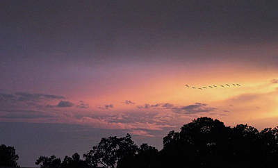 Photograph - Sunset Flight by Jessica Jenney