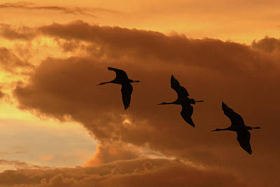 Photograph - Sunset Flight by Marie Leslie
