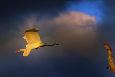 Beauty Mark Photograph - Sunset Flight by Mark Andrew Thomas