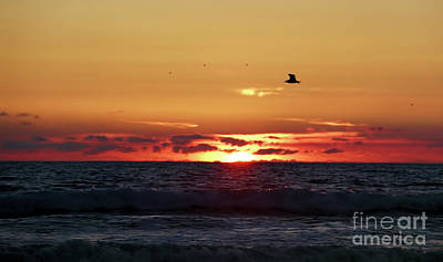 Photograph - Sunset Flight by Nicki McManus