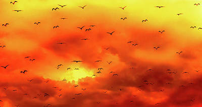 Photograph - Sunset Flight by Optical Playground By MP Ray